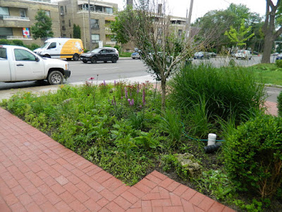 Avenue Road Toronto Front Garden Cleanup Before by Paul Jung Gardening Services