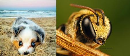 köpeği-arı-soktu