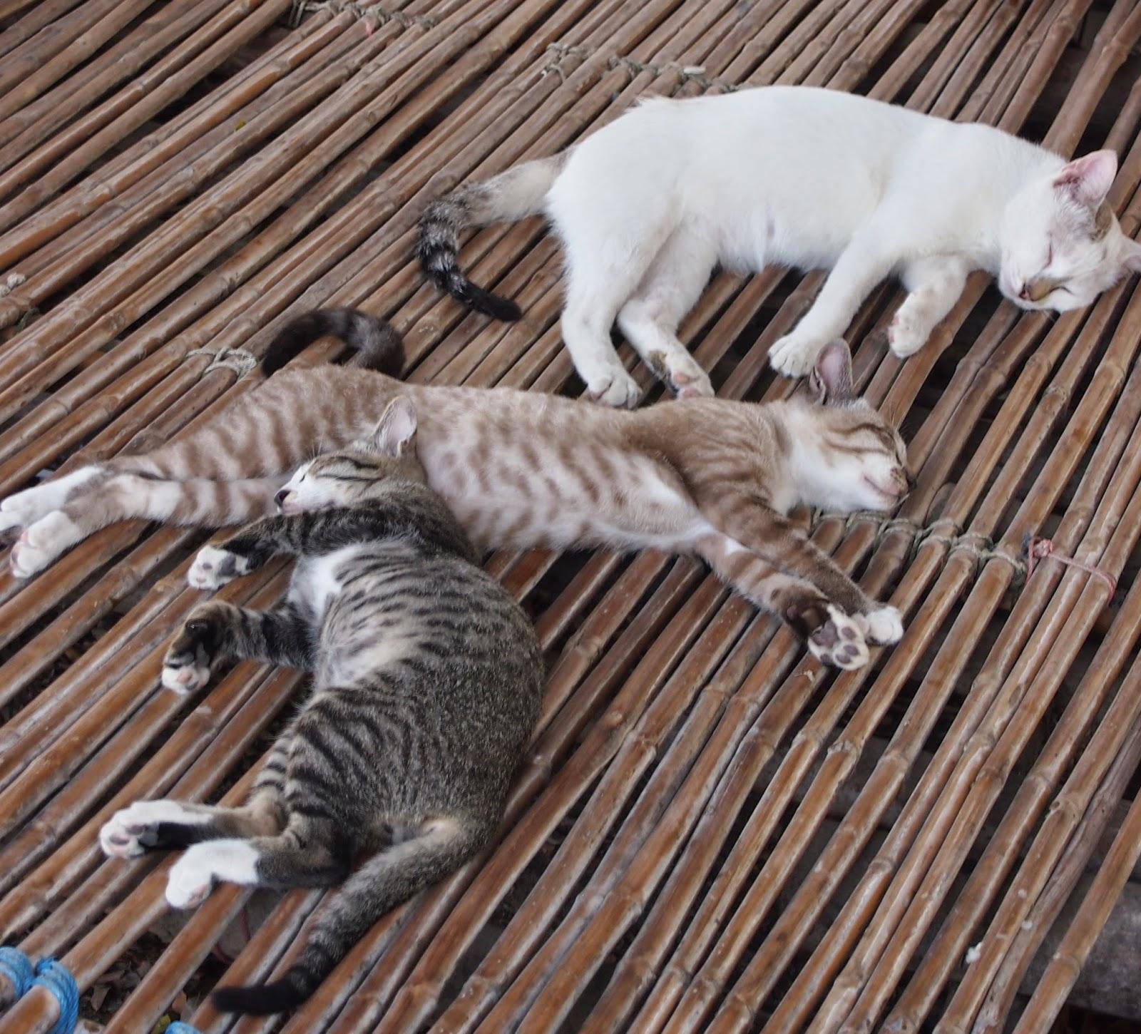 HIKILIIKKUJA : Thaimaan eläimet