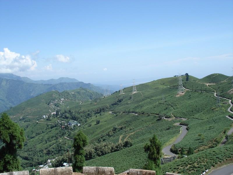 Darjeeling t