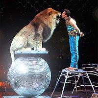 Bir sirkteki tehlikeli bir aslan gösterisinde eğiticisi parlak bir küre üzerindeki aslanı öpmeye çalışırken