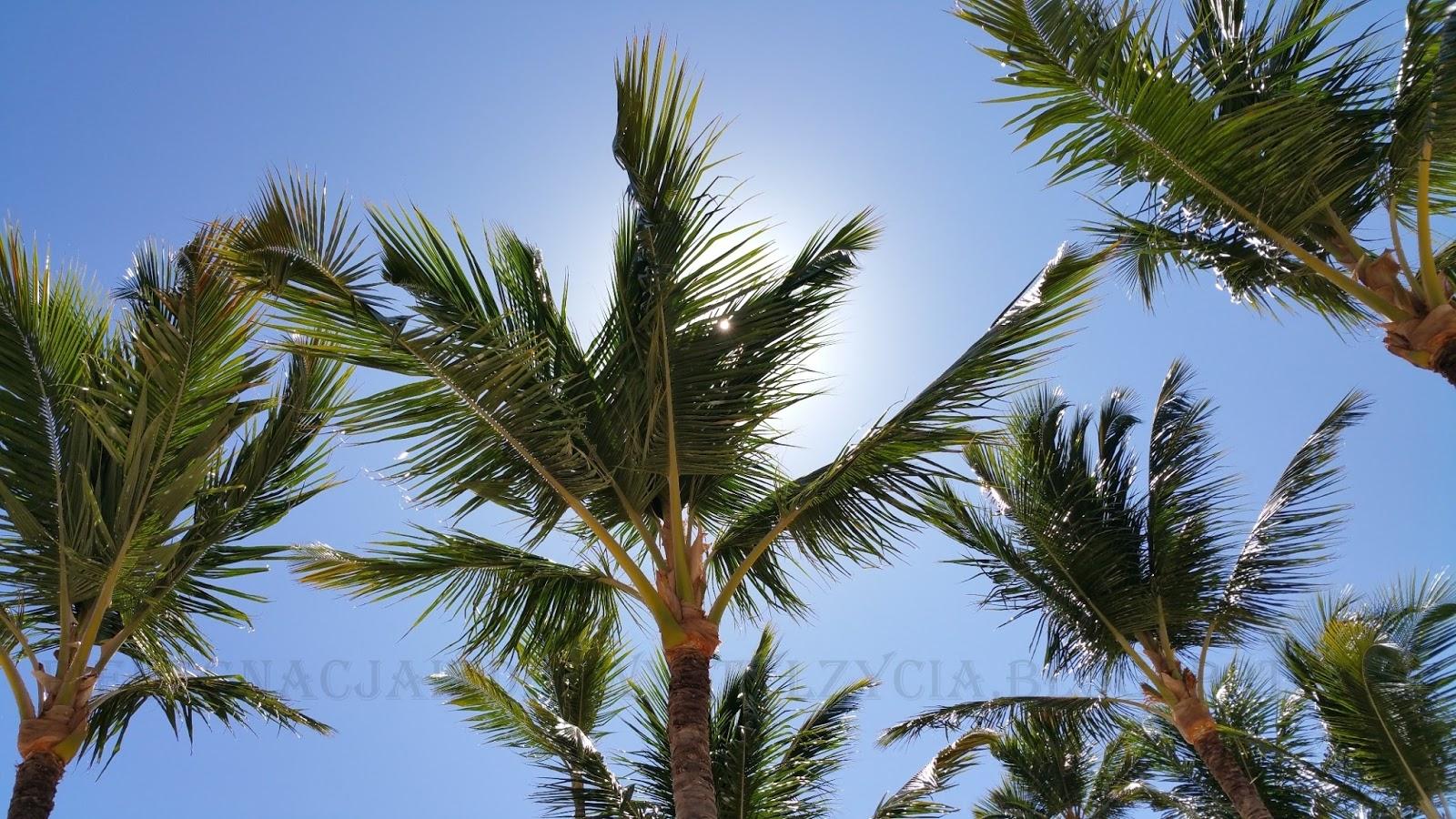 Palmy na plaży Dominikana