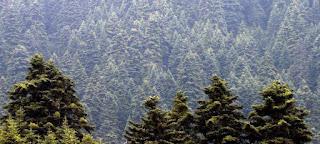 Παράταση για τους δασικούς χάρτες πριν χαθούν...