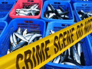 Illegal Fishing Turun 5 Persen