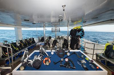 Majestic Explorer Dive Deck