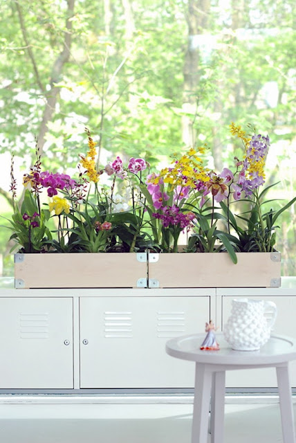 Decorate Your Interior With Orchids 5