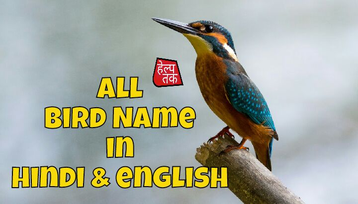Birds Name in Hindi And English - पक्षियों के