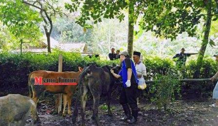 dinas pertanian lumajang