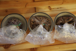 Venison, seasonings, brines for corning, in bag, ready for fridge!
