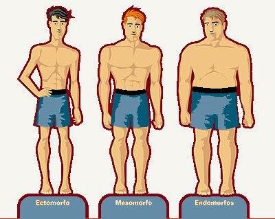 Resultat d'imatges de tipo de cuerpo