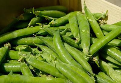 Peluang Usaha Sayuran Kacang Kapri