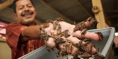 Potensi Bisnis Ternak Jangkrik Yang gak ada habisnya
