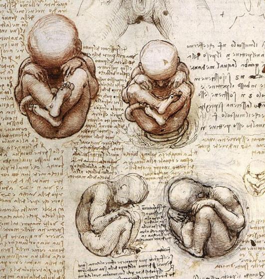 Views of Foetus in Womb