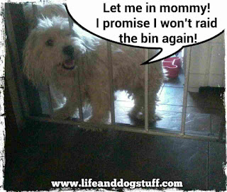 Buffy dog trying to get to garbage bin.