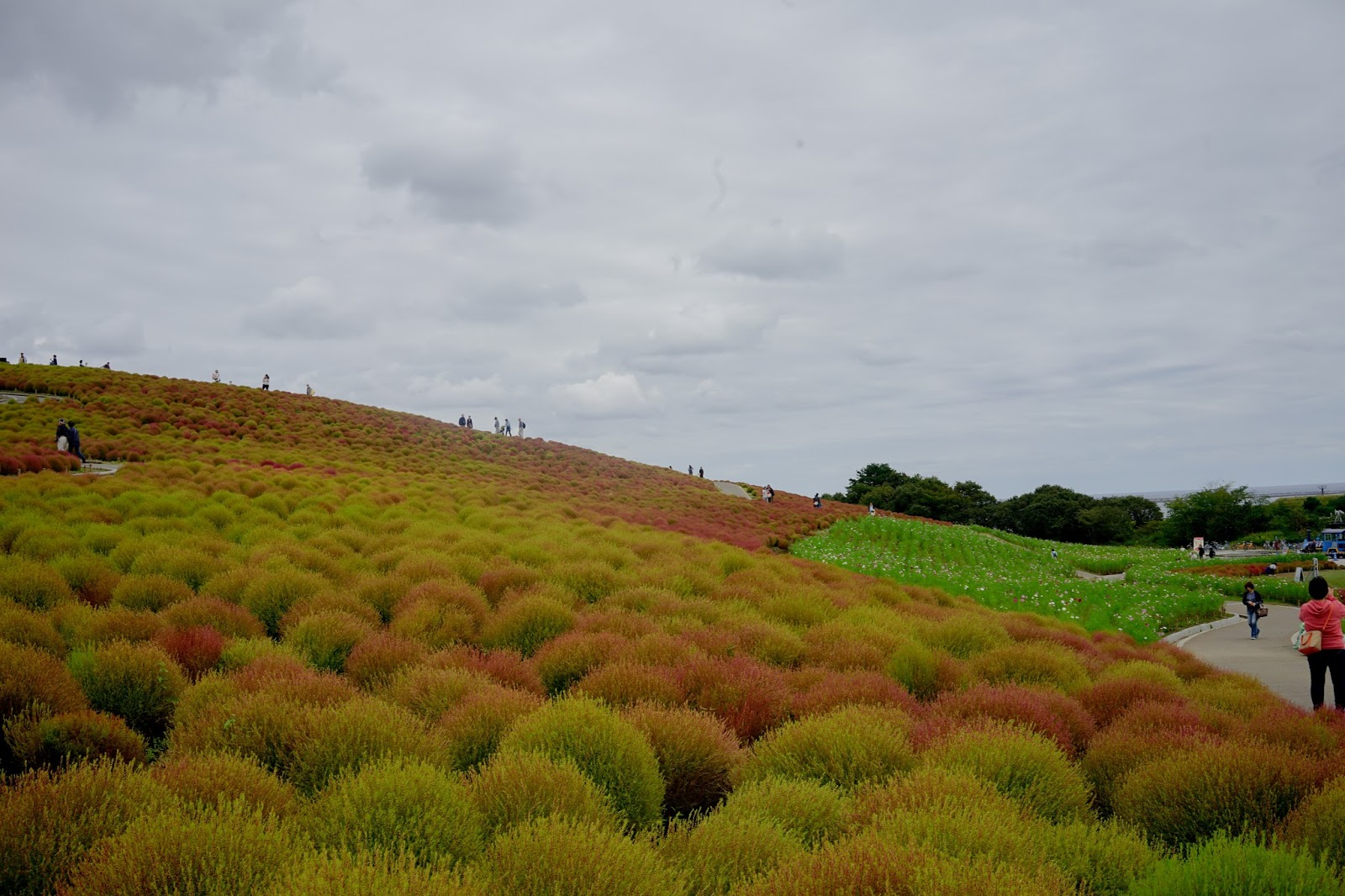 Hitachi Seaside Park Sereneleticia
