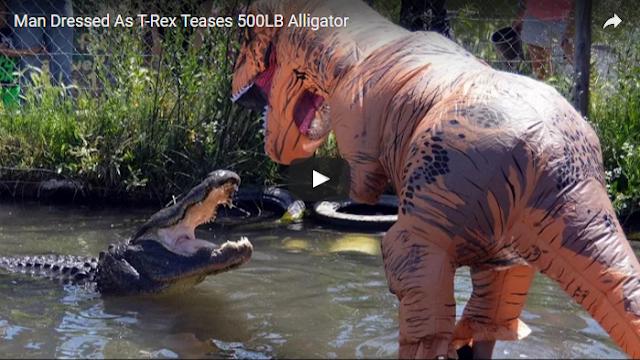 (VIDEO) Kocak! Pria ini Menggoda Buaya dengan Kostum T-Rex!