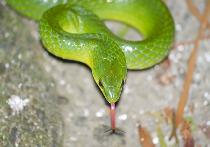 green snake court house lagos