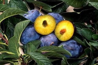 Mengenal buah Plum.
