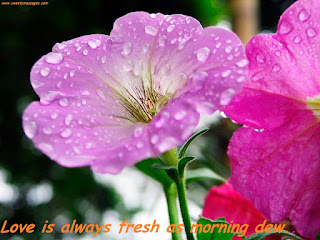 Love is always fresh as morning dew