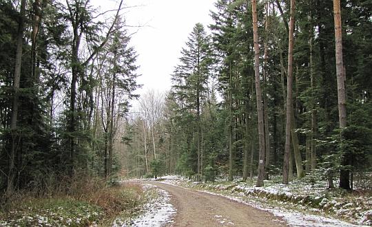 Leśna droga nr 3, należąca do Nadleśnictwa Bogoniowice