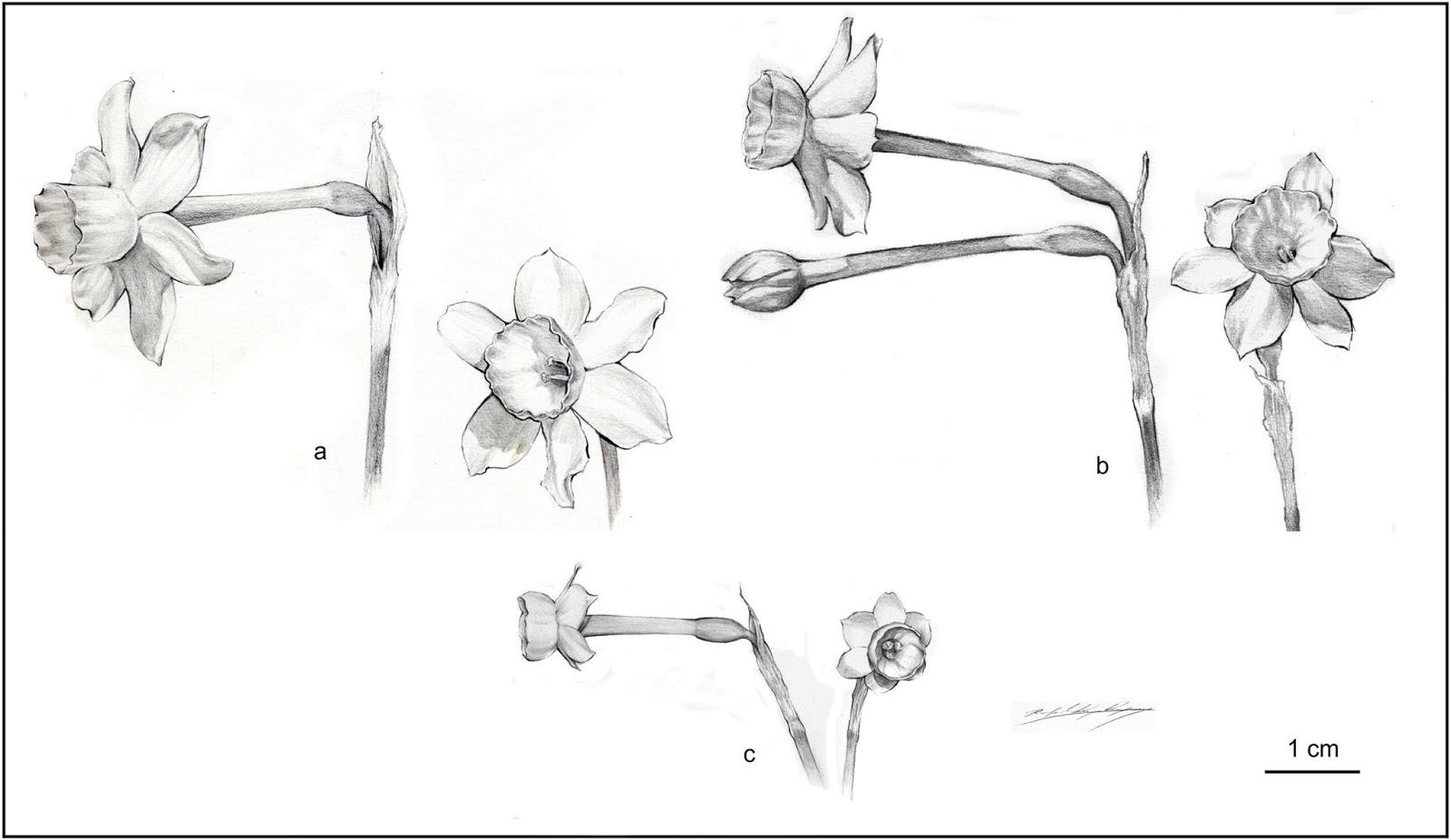 Prospectus Flora Ibericae