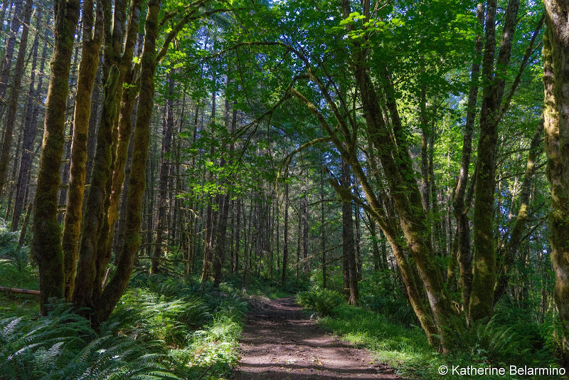 Molalla River Trails System Huckleberry Trail 5 Great Hikes in Oregon's Mt. Hood Territory