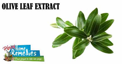 Home Remedies For Yeast Infection: Olive Leaf Extract