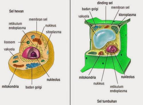 Materi Kuliah Biologi Sel dan Molekuler