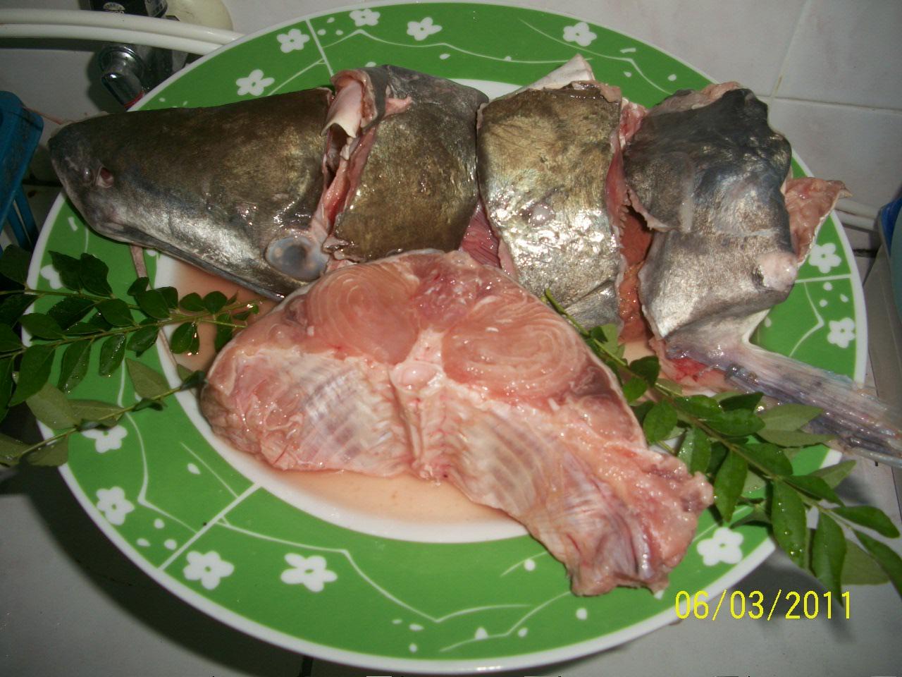 RESEPI SUMBANGAN JY 2008-2020: 283. ikan nyok-nyok dan ikan seludu aka plotan