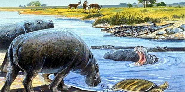 New hippo species identified in Abu Dhabi