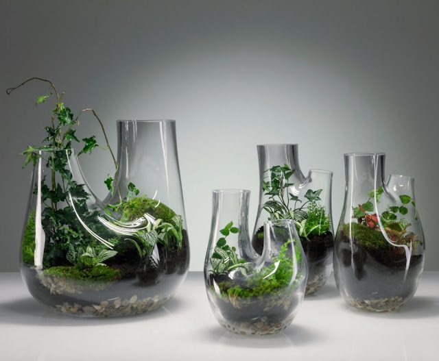 Terrarium in Glass