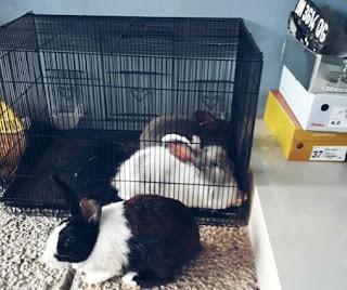Kandang Kelinci yang Bisa Dipindah Pindah