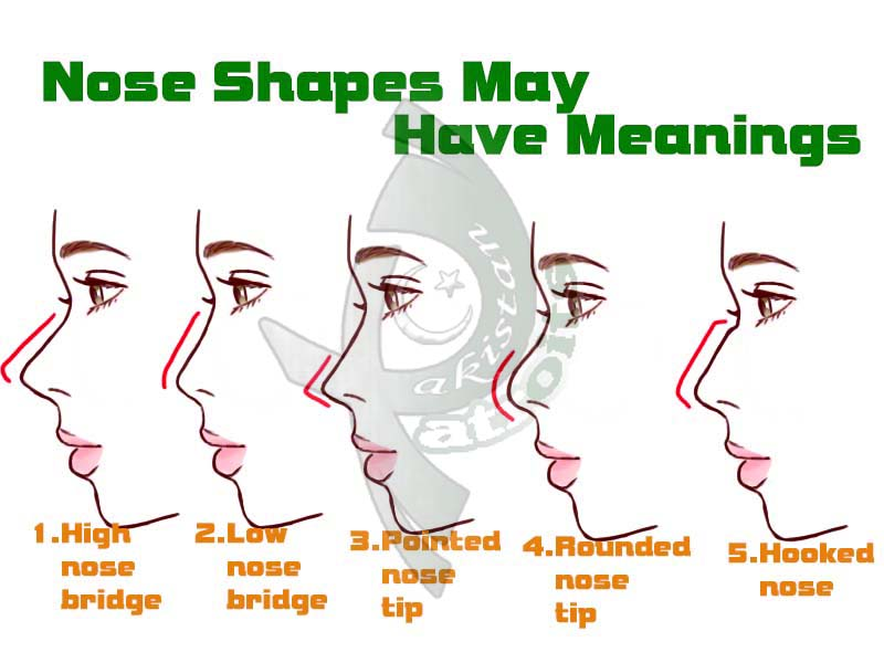 nose shapes and names - 800×600
