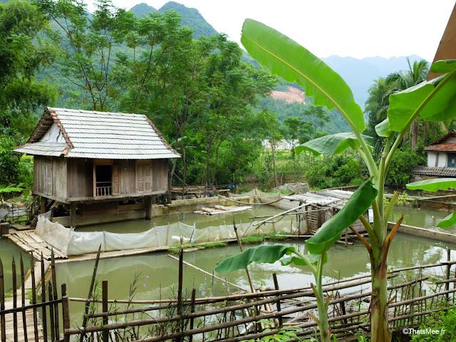 vietnam voyage 15jours mai chau nord montagne riziere elevage poissons