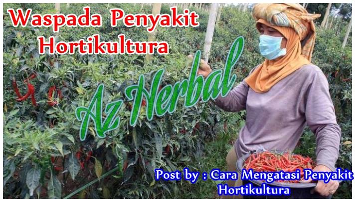 Cara Mengatasi Penyakit Hortikultura