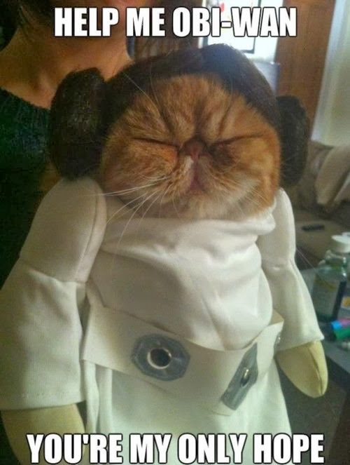 Star Wars Princess Leia Cat Silly Bunt