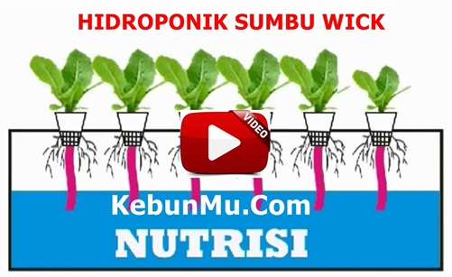 Video Cara Membuat Hidroponik Sistem Sumbu Wick Dengan Botol Plastik Bekas Air Mineral