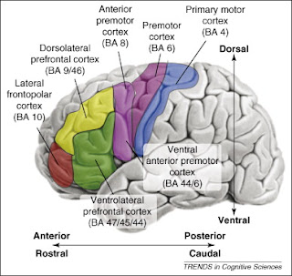 Cognitive Neuropsychology 101: Frontal Lobes