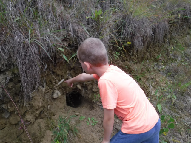 boy looking at animal created hole at five ridge prairie westfield iowa