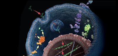 Biologia celular y ramas de la biologia