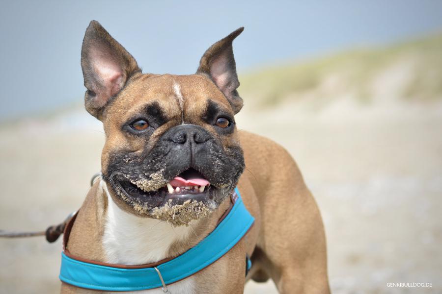 Niederlande Holland Texel Urlaub mit Hund Strand Paal 19