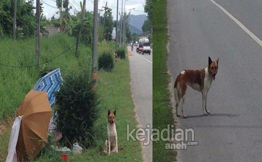 kisah anjing setia 13 Kisah Kesetiaan Anjing yang Dijamin Bikin Nangis