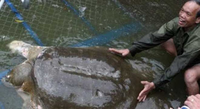 Vấn đề thay thế cá thể Rùa cho cụ Rùa đã mất