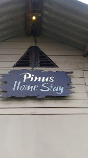 homestay pinus