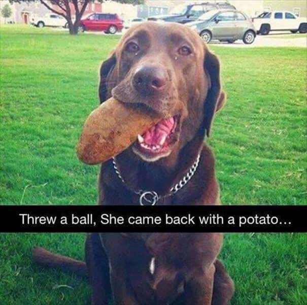 20 Hilarious Pictures Of The Silliest But Cutest Dogs In The World That Made Our Day