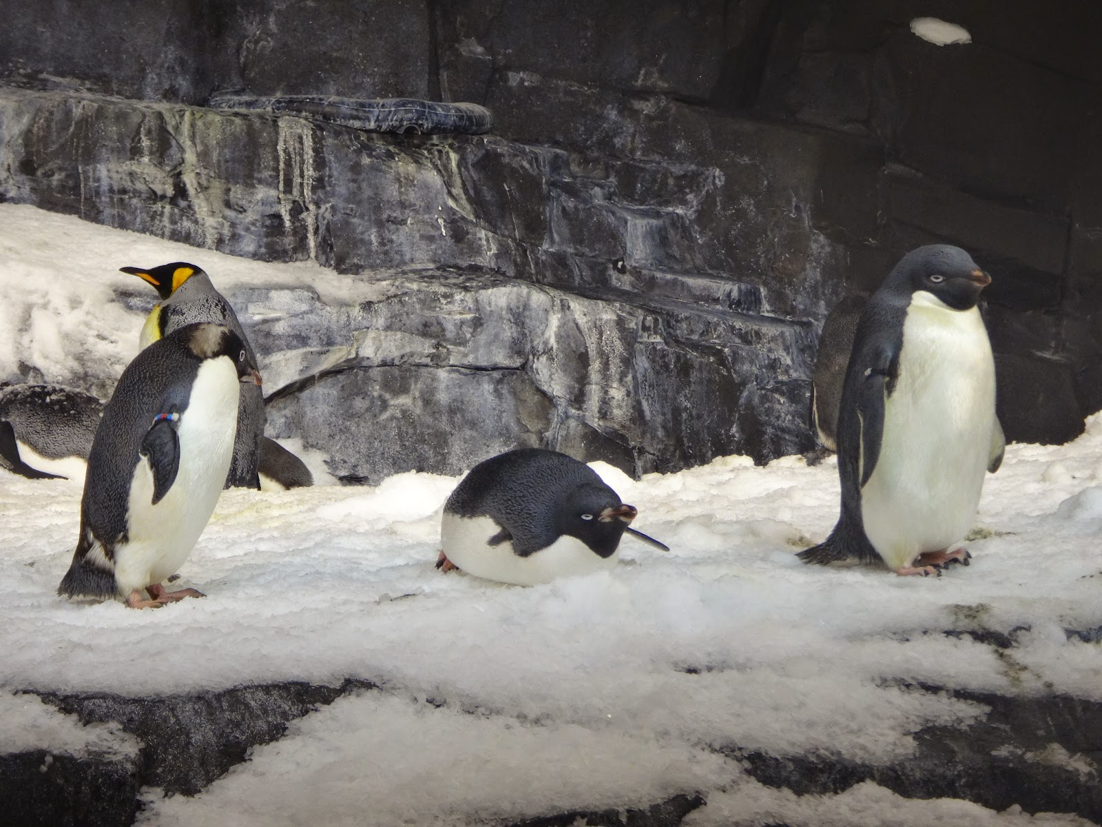 pinguins - penguin encounter - parque sea world - orlando, florida