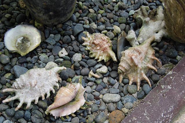 Ракушки на Филиппинах