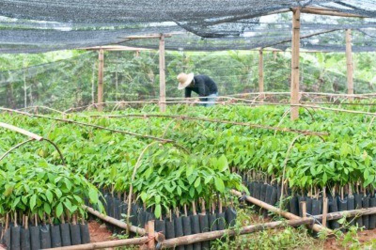 Prateek Mishra Plantation Of Tree