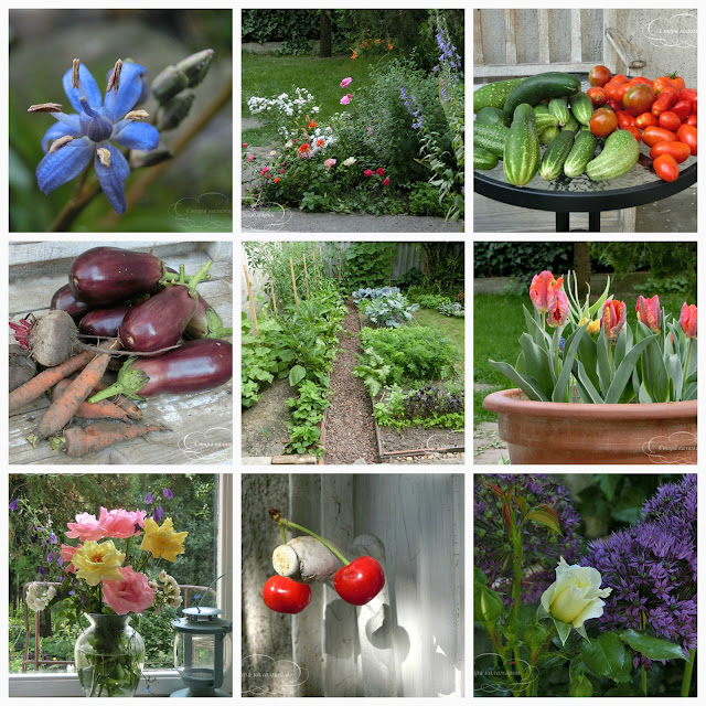 огород в центре Европы, опыт жизни в Венгрии, сад и дом