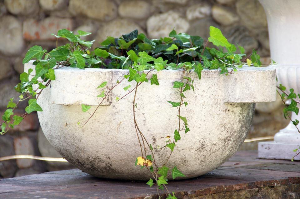 10 piante che purificano l 39 aria di casa donneinpink magazine - Edera da interno ...
